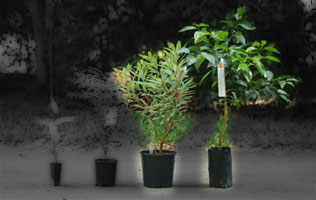 Special plants and fruit trees